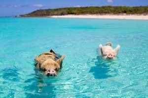 pi-beach-Rhonda-Albom-Pinterest-min